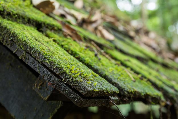 tagrens af alger