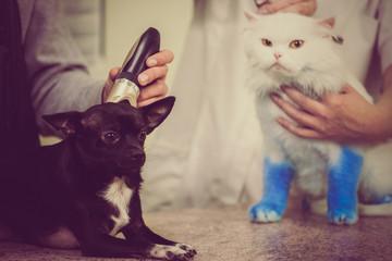 kæledyr bliver trimmet